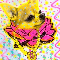 Msdre - Gangsta Chain Chihuahua (Original)